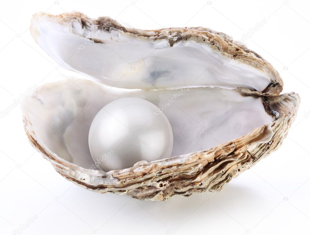 Image of a white pearl in a shell on a white background. — Stok fotoğraf #5007585