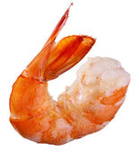 Shrimp isolated — Stock Photo