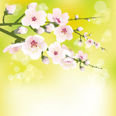 Spring blooming — Stock Vector