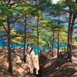 Pine trees and blue sea - Stock Photo