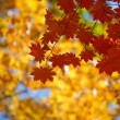 Stock Photo: Beautiful autumn season