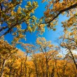 Stock Photo: Autumn branches stretch to sky