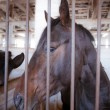 Stock Photo: Horse behind bars