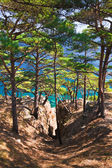 Pine trees and blue sea — Stock Photo
