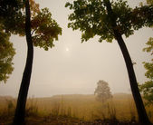 Two autumn oak in the fog — Stock Photo