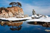 Winter reflection — Stock Photo