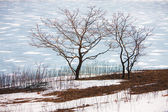 Winter tree against the background of the sea — Stock Photo