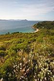 Zomer groene landschap — Stockfoto