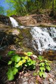 Bloem bij de waterval — Stockfoto