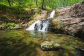 Net forest stream — Stock Photo