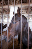 Horse behind bars — Stock Photo