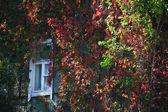 Window colors — Stock Photo