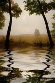Autumn mist! — Stock Photo