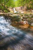 夏季森林中的流 — 图库照片