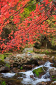 Purple autumn foliage on a background of stream — Stock Photo