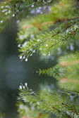 Branches of trees reflected in water — Stock Photo