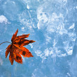 Maple Leaf on ice - Stock Photo