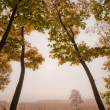 Lovely autumn trees - Stock Photo