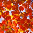 Autumn miracle — Stock Photo