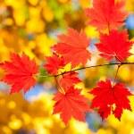 Types autumn — Stock Photo #4268648