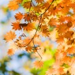 A trace of the beautiful autumn — Stock Photo #4268666