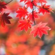 Picture of a beautiful autumn — Stock Photo