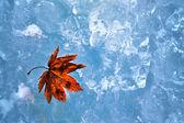 Maple Leaf on ice — Stock Photo