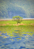 Tree by the lake — Stock Photo