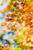 A trace of the beautiful autumn — Stock Photo