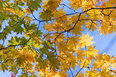 Trace strange autumn — Stock Photo