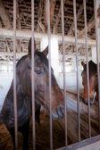 Horse behind bars — Stock Photo