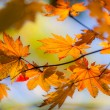 Stock Photo: Momentary fall