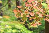 Pretty Fall — Stock Photo