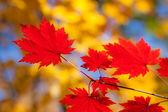 Autumn tone — Stock Photo