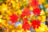 Next fall — Stock Photo