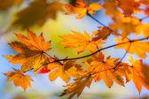 Momentary fall — Stock Photo