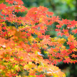 Autumn landscape.12 — Stock Photo