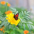 Active beautiful butterfly on a bright flower in the garden - Stock Photo