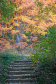 Staircase in autumn park — Stock Photo