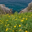 Stock Photo: Dandelions on seshore