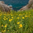 Stock Photo: Dandelions on seshore1