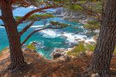 Cedar by the sea1 — Stock Photo
