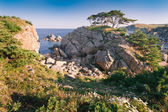 Cedar in the sea — Zdjęcie stockowe