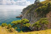 Green cedar in the sea — Stock fotografie