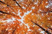 Oak thicket — Stock Photo