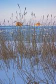 Winter Sea — Zdjęcie stockowe