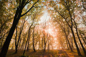 In the autumn forest — Foto Stock