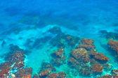 Strange seabed — Stock Photo