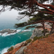 Green cedar in sea — Stock Photo #4605664