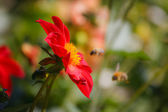 Flower and two bees — Stock Photo
